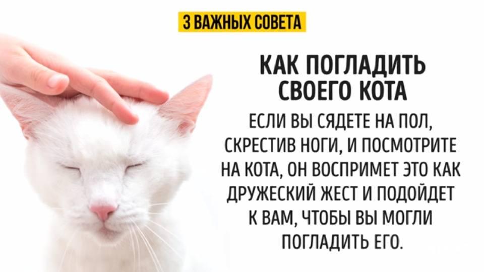 Почему нельзя целовать кошек? ответ поражает!
