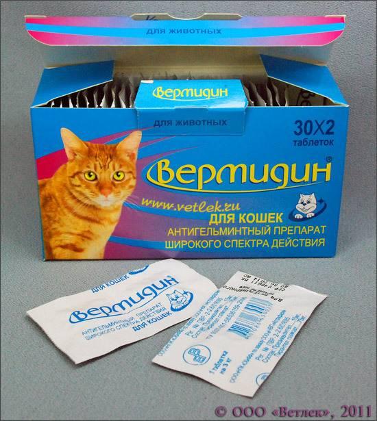 Какие лекарства можно самостоятельно давать котам против поносов дома