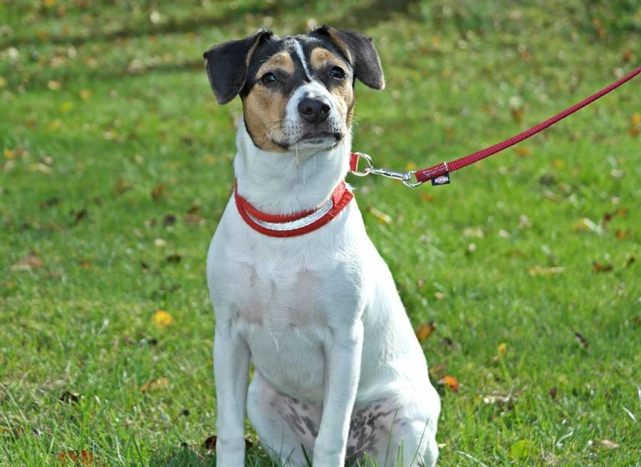 Скандинавские породы - норвежские, шведские, датские и финские породы собак с фото и названиями.