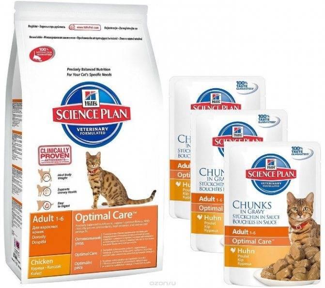 Какой корм выбрать для кошки и что должно быть в составе корма | hill's pet