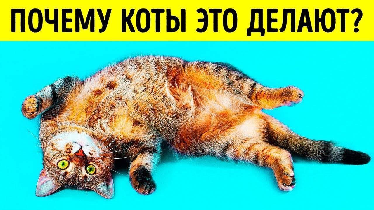 Почему кот может спать на спине, раскинув задние лапы и показывая живот, кошка лежит на полу и мяукает – что это значит?
