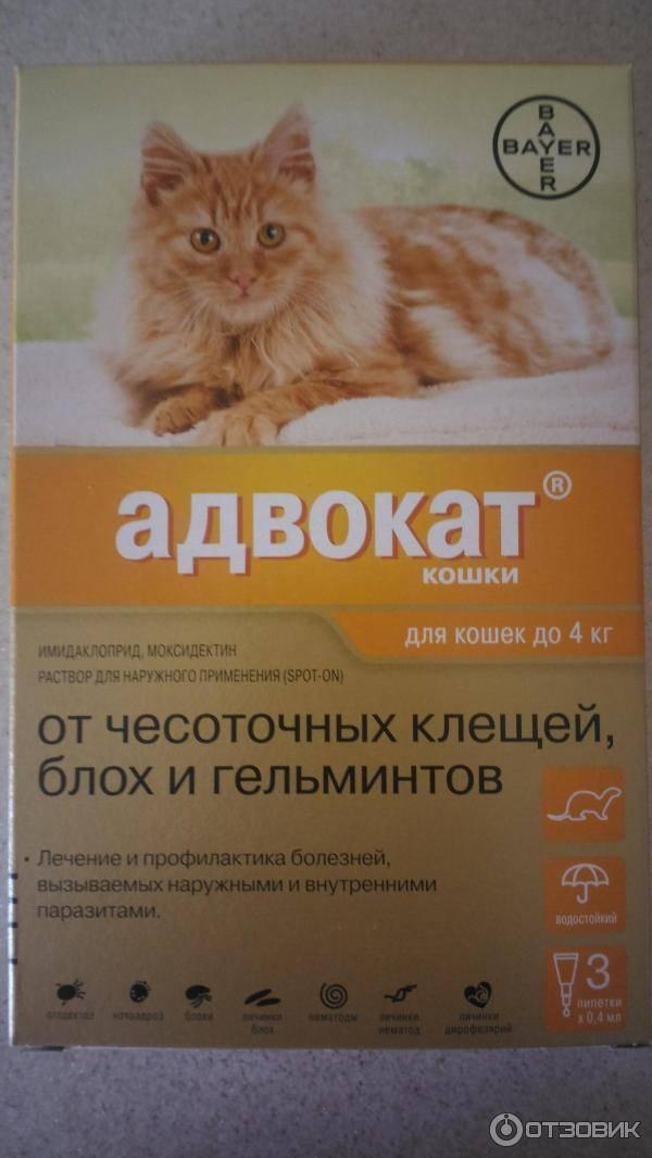 15 лучших капель на холку от блох для кошек | животный мир