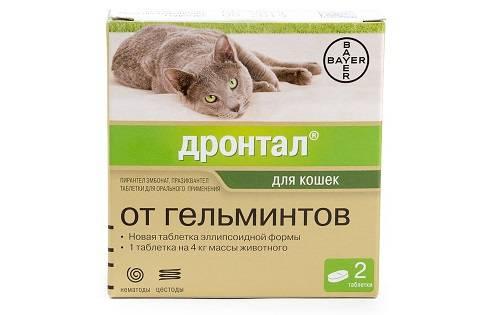 Профилактика глистов у собак и кошек. как правильно провести?