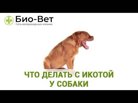 Собака, щенок икает: причины, что делать