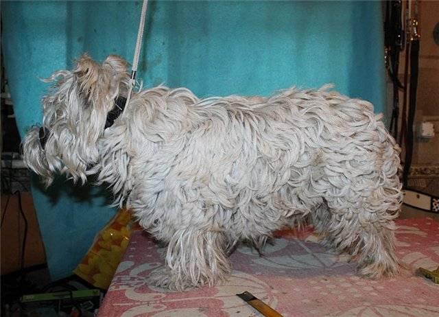 Линька у собак: что делать, когда питомец линяет, что такое экспресс линька, советы - kotiko.ru
