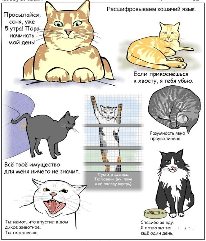 Кошачий характер … какой он? признаки, определяющие характер вашей кошки