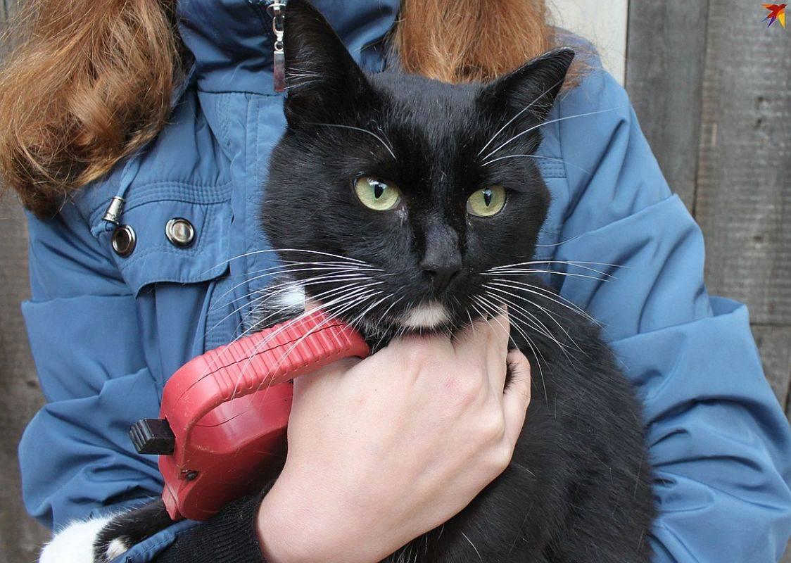 Коты, которые спасли жизнь своим хозяевам - усатый-полосатый - медиаплатформа миртесен