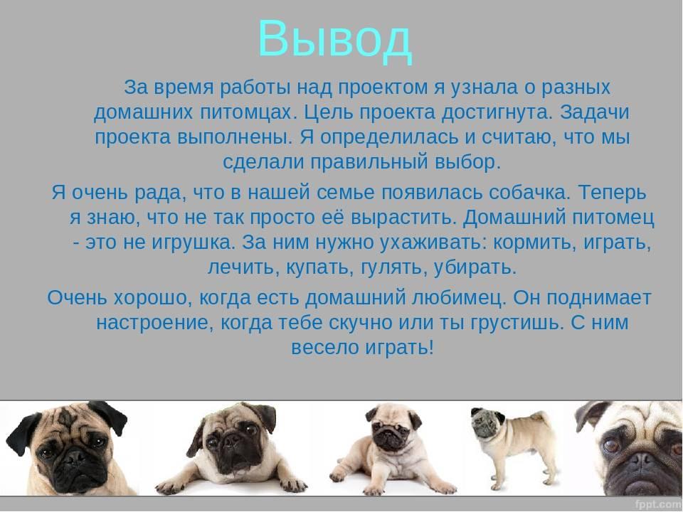 Уход за мопсом: как ухаживать за собакой, нужны ли стрижка, подрезание когтей и одежда, а также другие нюансы содержания питомца