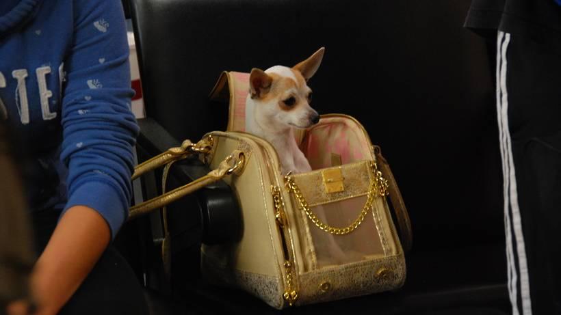 Как правильно перевозить собаку в метро - gafki.ru