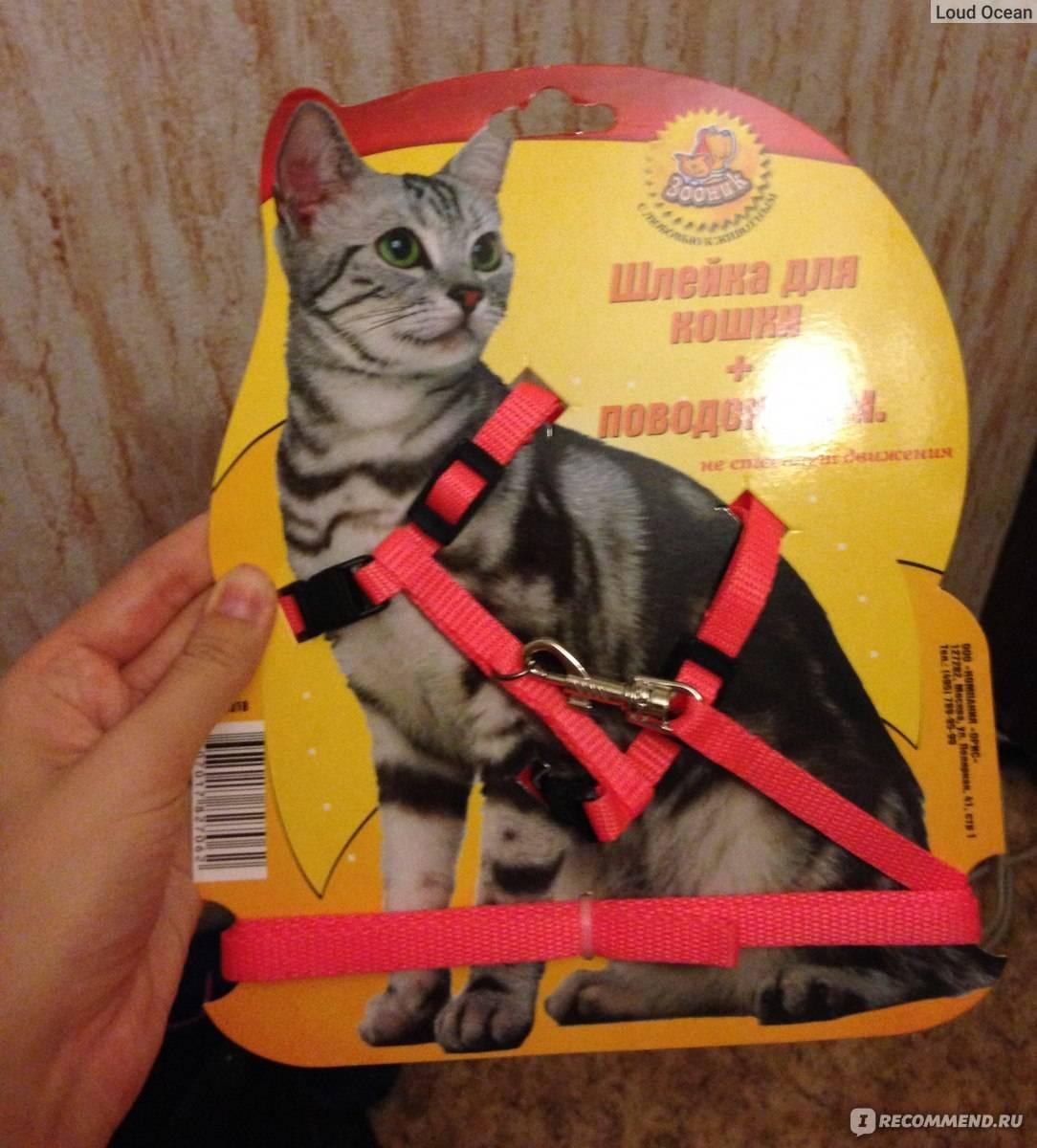 Как приучить кота или кошку к шлейке: как выбрать аксессуар для взрослого питомца