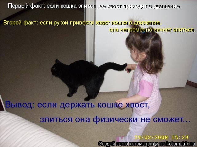 Как приучить немолодого кота к новому дому?