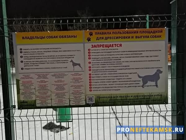 Выгул и содержание собак (32 фото): новые правила с 1 января 2021 в россии и законы. можно ли выгуливать животных в городе без поводка и намордника? статья коап и штрафы