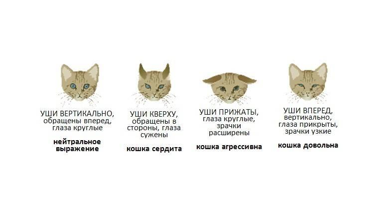 Кошачий характер ... какой он? признаки, определяющие характер вашей кошки | домашние животные
