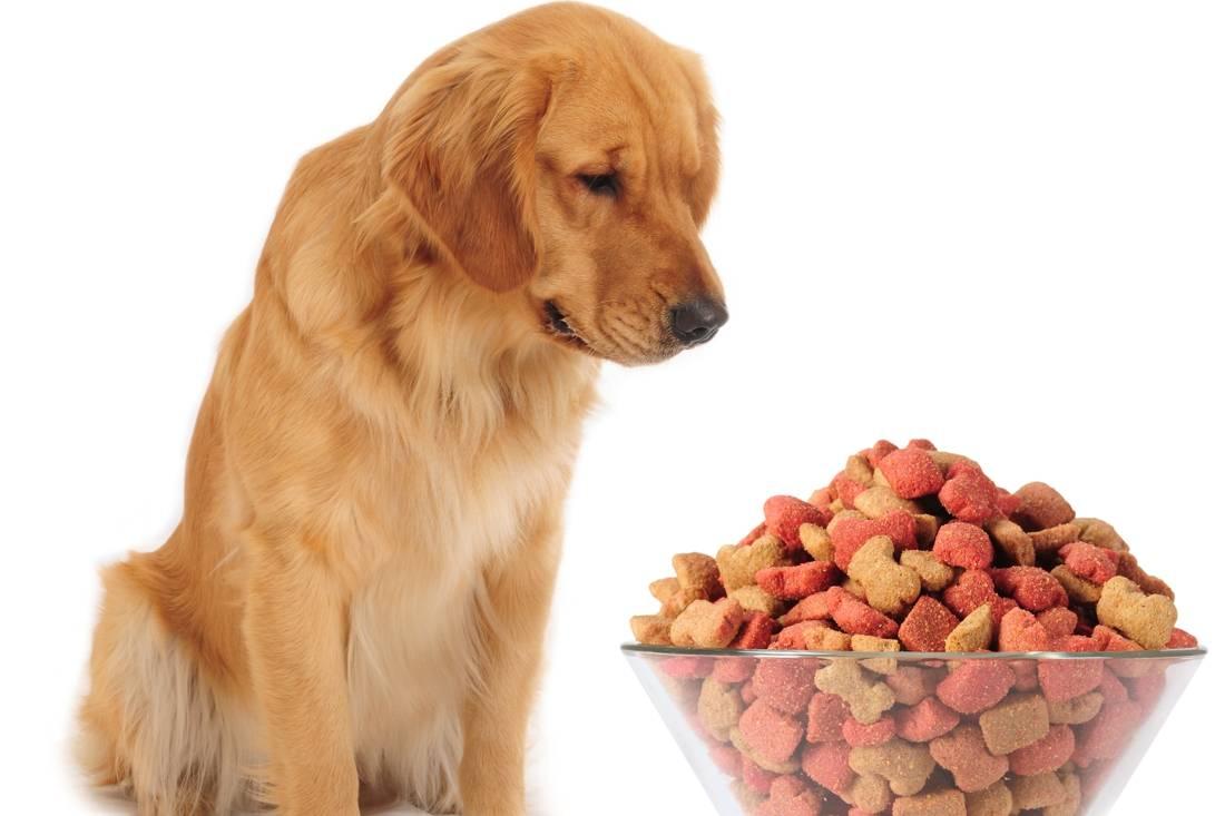 Собака горбит спину: причины, диагностика, лечение
