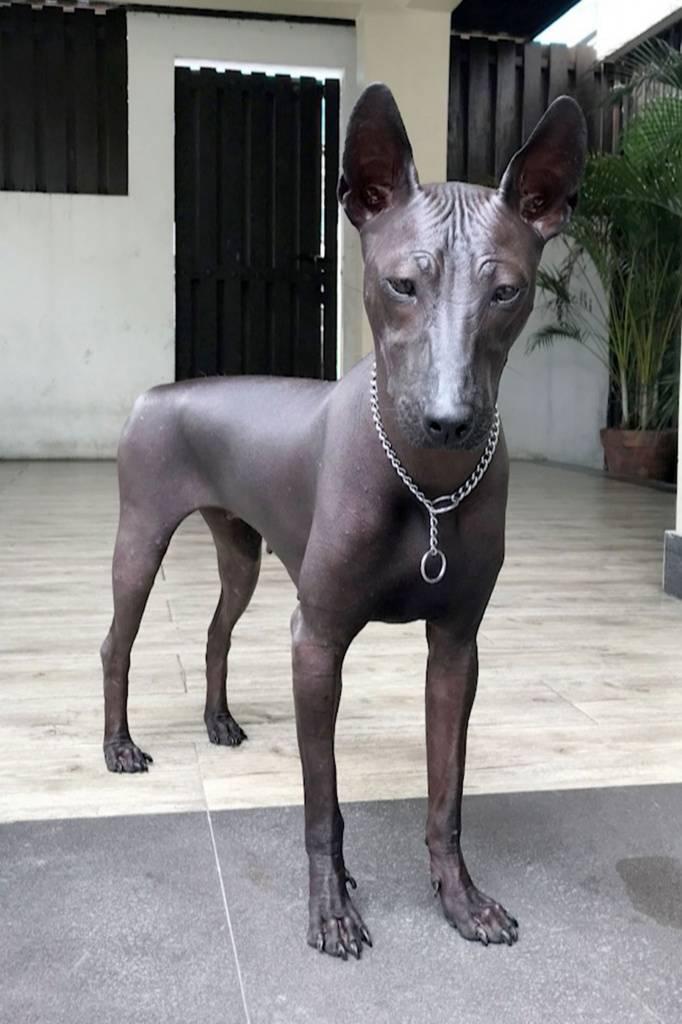 Редкие породы собак — полный перечень с описаниями