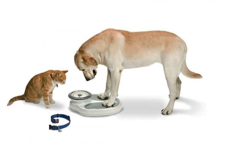 Ожирение у собак – причины появления и что делать