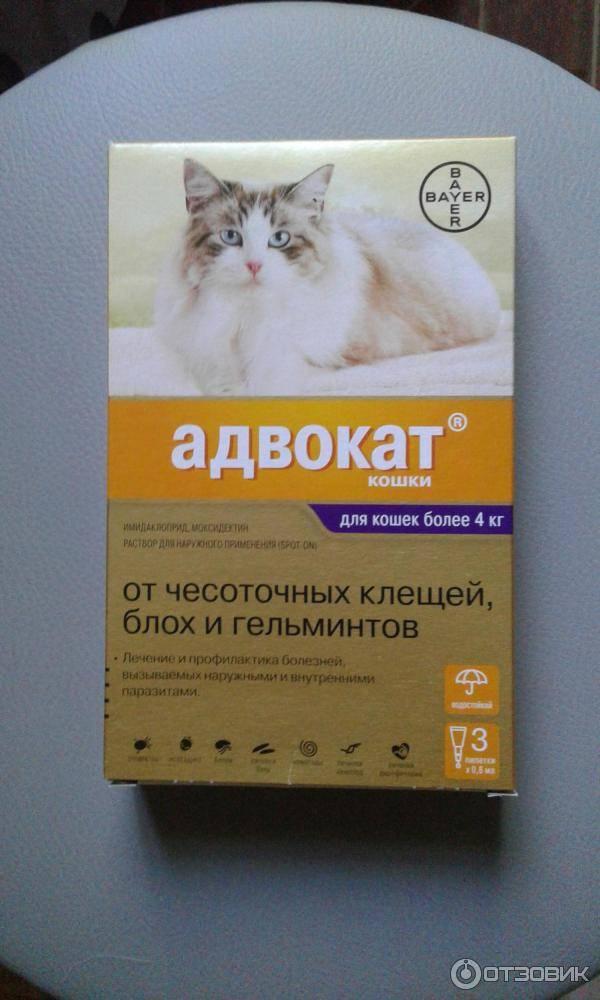 Бродлайн Спот Он для кошек