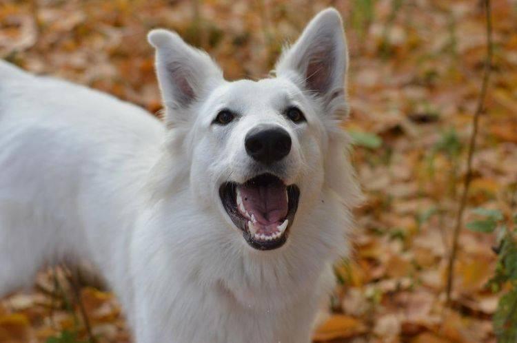 Собаки, как зависит состояние шерсти от питания собак