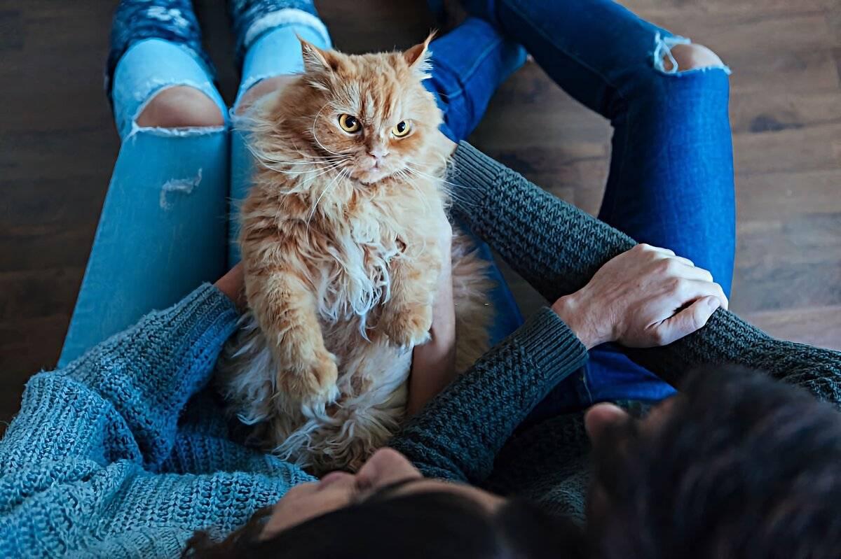 Как кошки проявляют любовь к хозяину - топ 18 проявлений любви - kotiko.ru