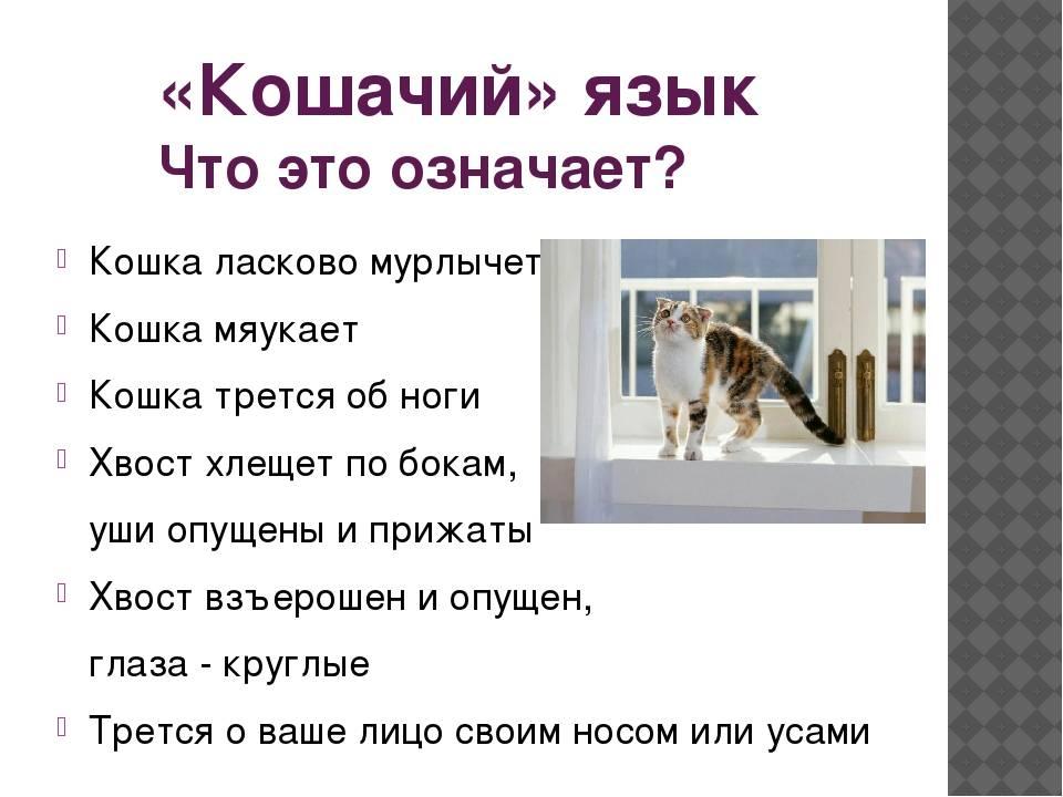 Кот орет по ночам — инструкция, что делать, если не дает спать