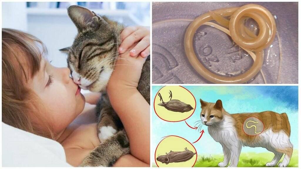 Кровь в кале у кошки причины и лечение