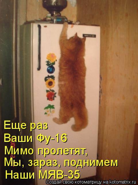 почему кошки просят открыть дверь, но не заходят