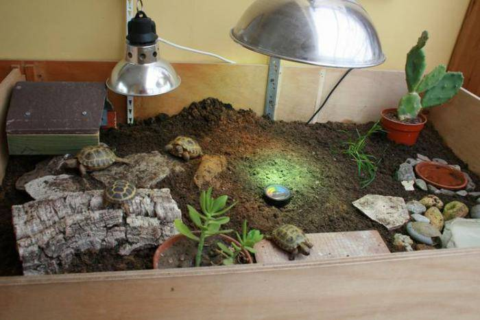 Как устроена уф лампа для рептилий? почему она люминесцентная?