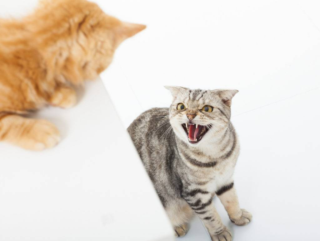 Почему кошки становятся агрессивными? причины и что с этим делать? ~ коточек