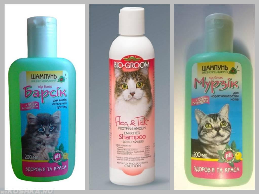 Шампуни от блох для кошек: отзывы, инструкция и обзор средств