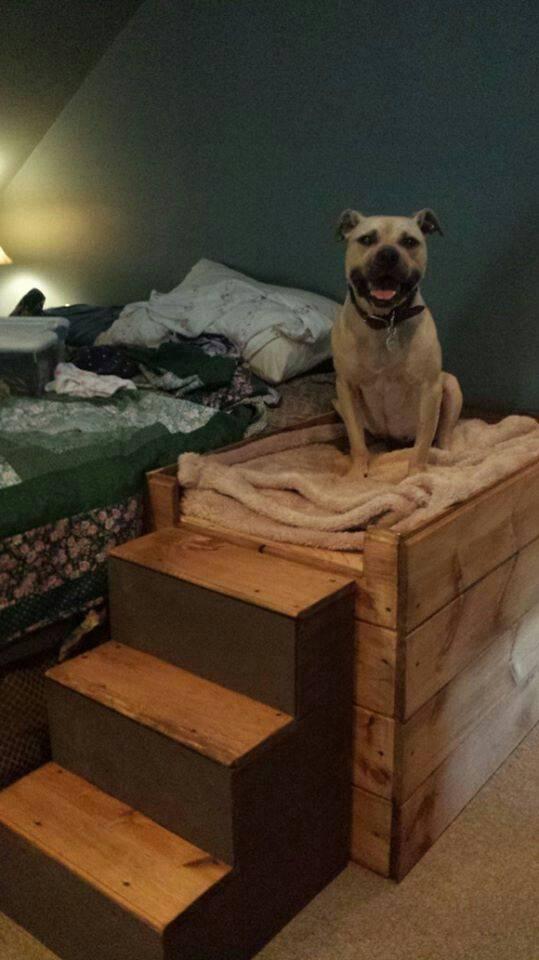 Лайфхаки, как подружить собак между собой