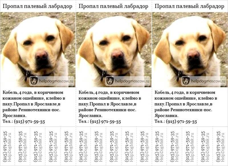 Клички для лабрадора мальчика и девочки: сотня имен для собаки, а также идеи как назвать породы черного, белого и палевого цветов