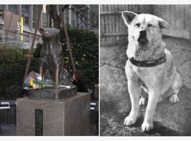История собаки хатико породы акита-ину и его влияние на культуру японии
