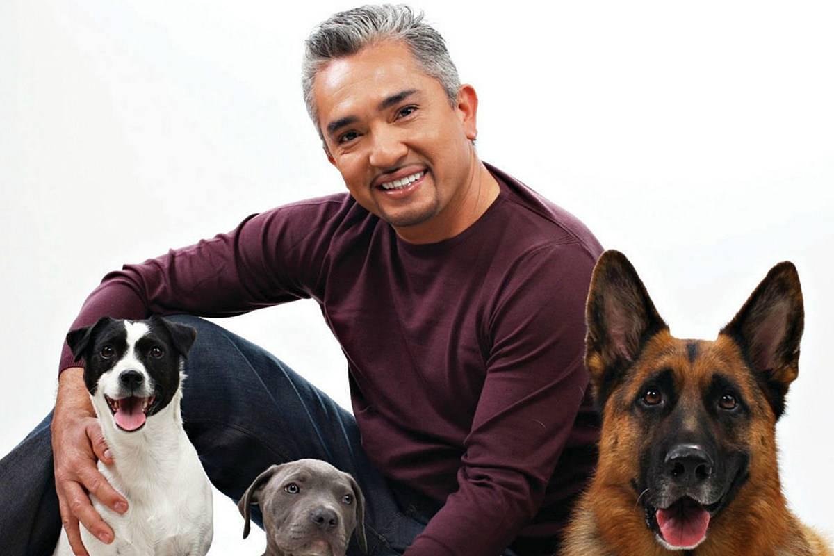 Зачем собакам нужен хозяин?. простые вопросы. книга, похожая на энциклопедию