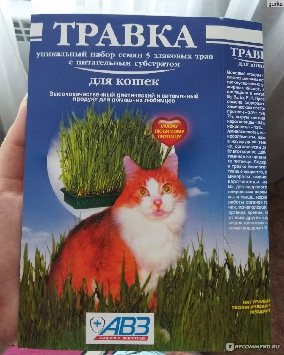 Травка для кошек как источник витаминов
