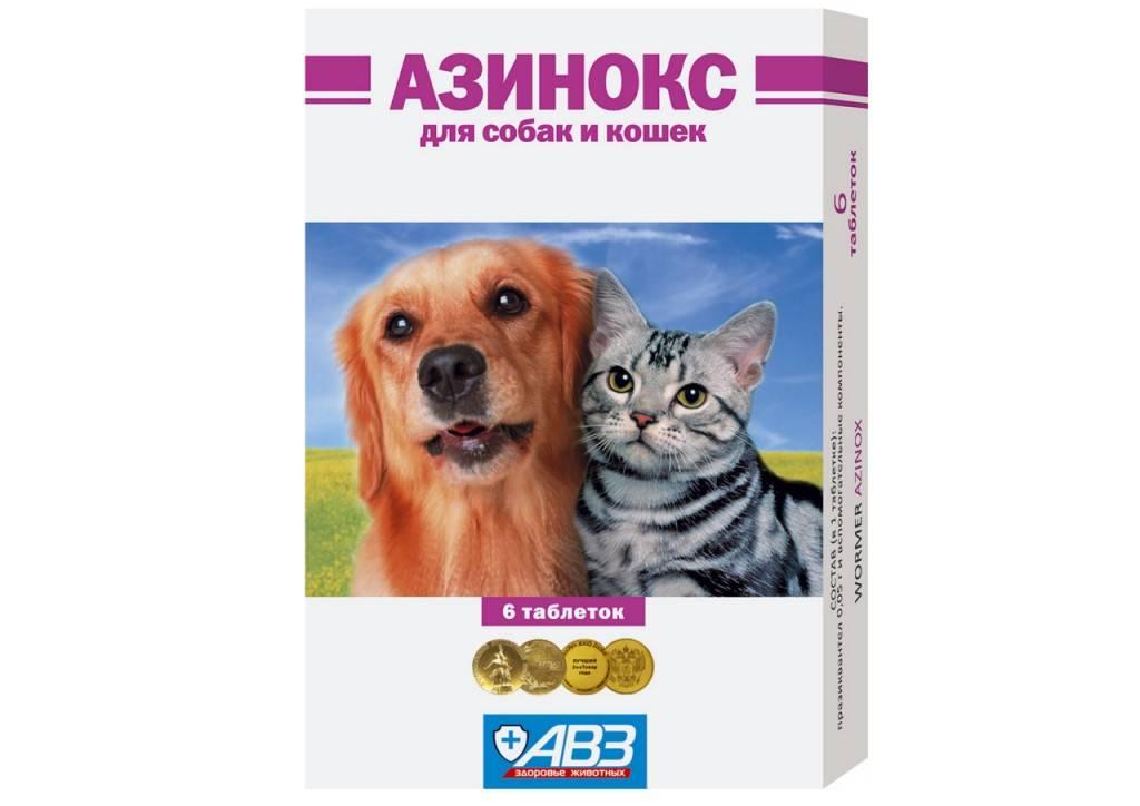 Азинокс для кошек: инструкция по применению, действие, эффективность и отзывы специалистов