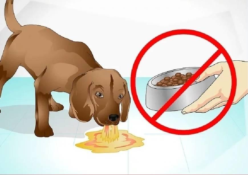 Щенок не ест сухой корм: что делать?