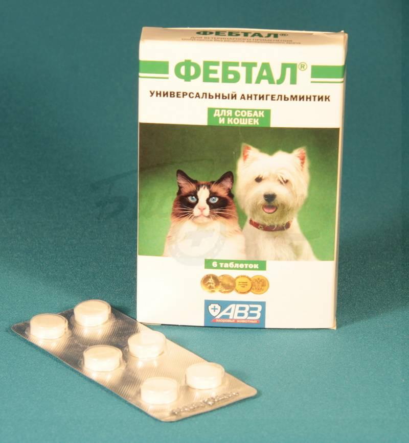 Фебтал для собак: инструкция по применению