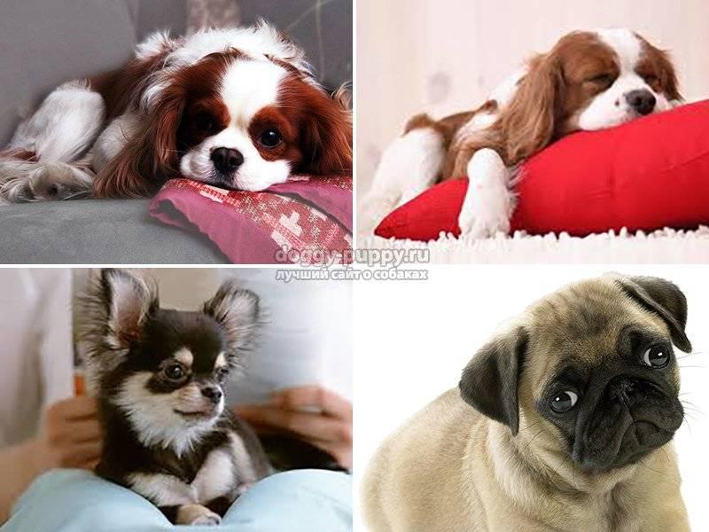 Рейтинг топ-60 лучших пород собак для детей