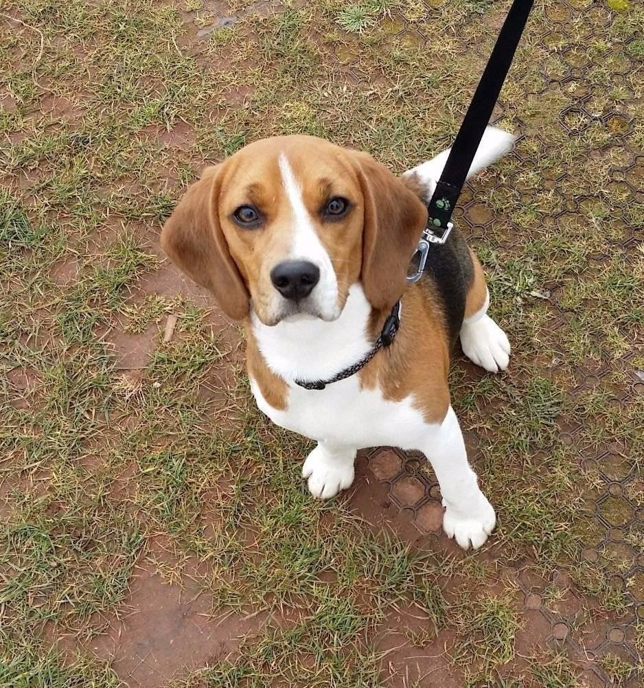 Карликовые породы собак — список с фото и названиями карманных собачек