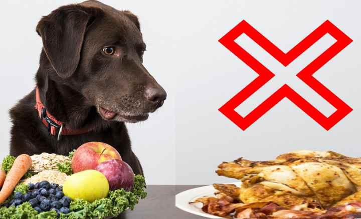 Какие кости можно давать собакам - можно ли давать собаке куриные кости - лапы и хвост