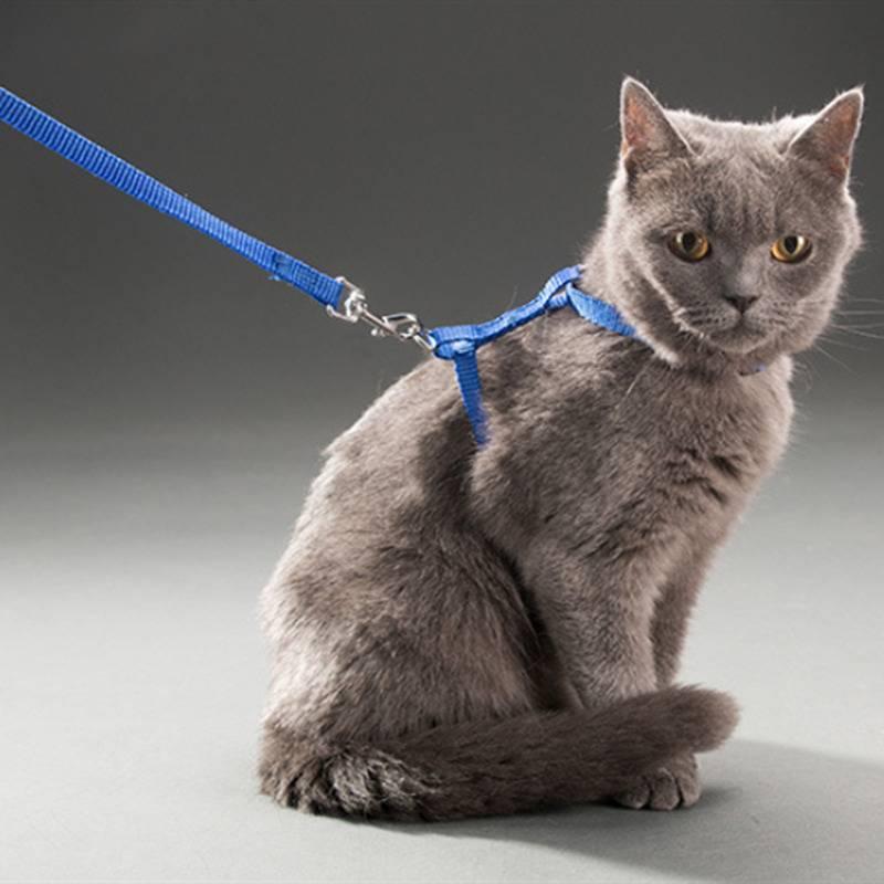 Как одеть ошейник или шлейку на кошку: все тонкости процесса