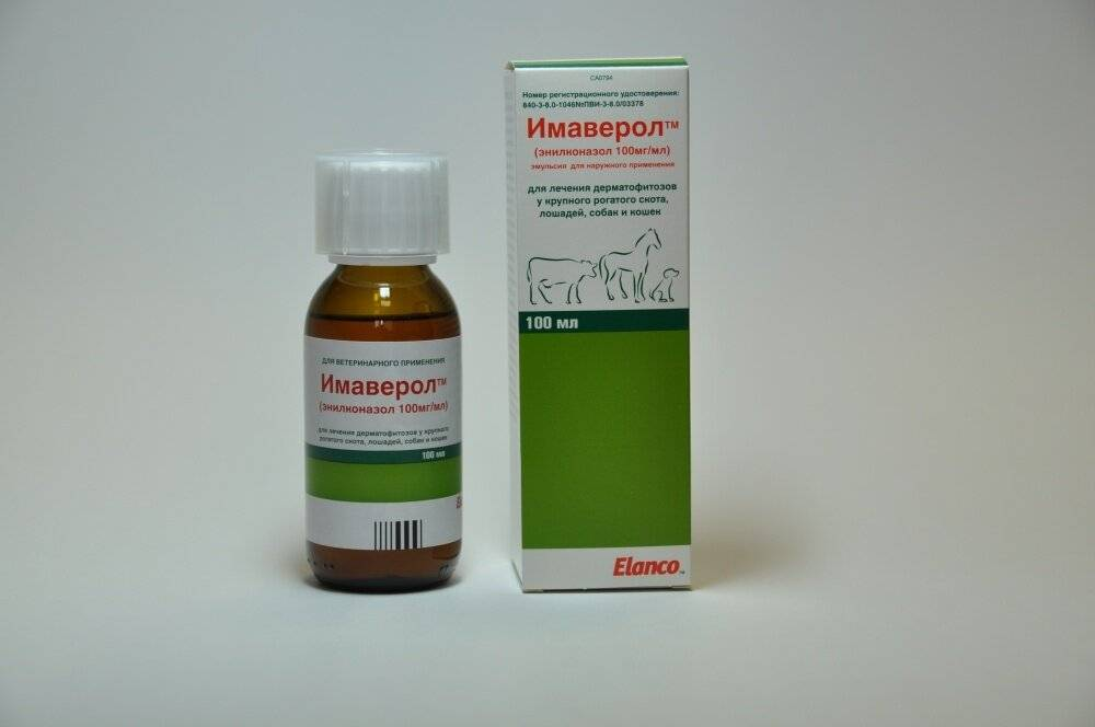 Лишай у кошек: препараты для лечения