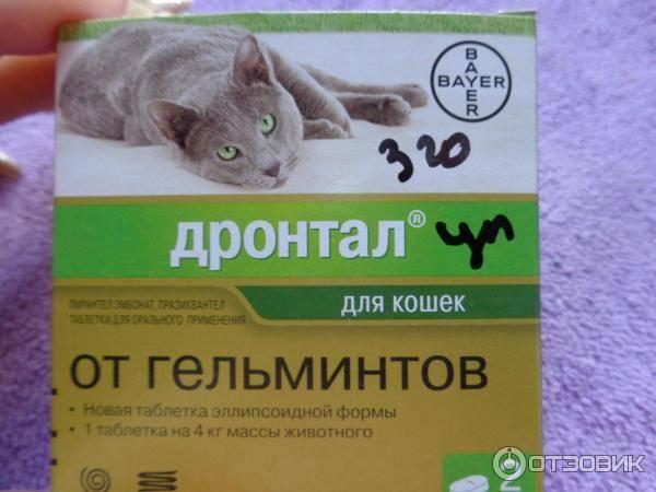 Как выбрать препарат от глистов для кошки