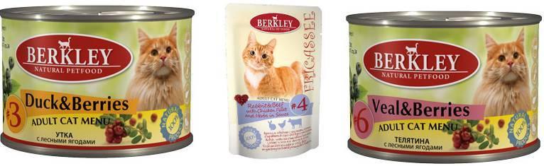Корм для кошек wellkiss: отзывы ветеринаров и владельцев животных о нем, его состав и виды, плюсы и минусы