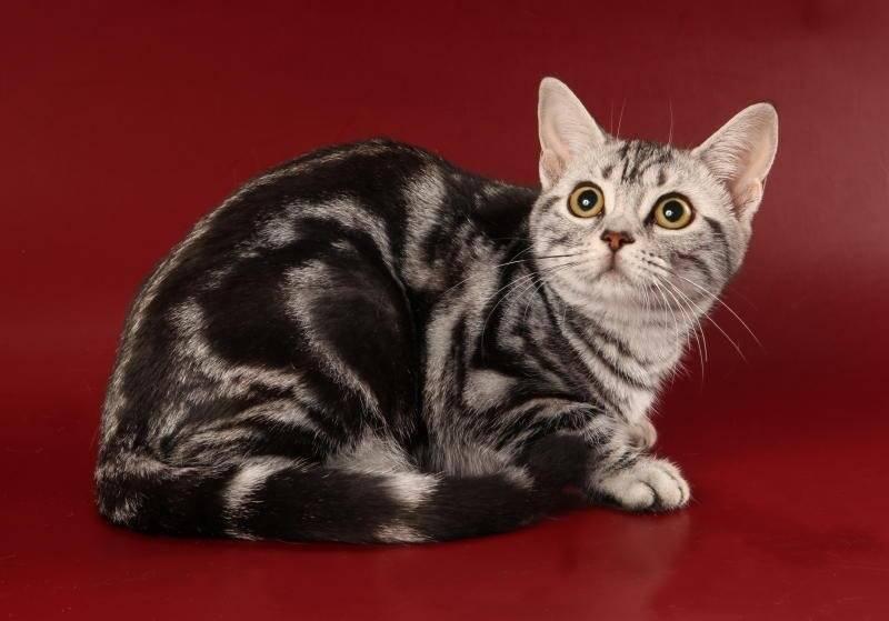 Расческа для кошек: перчатка и варежка, триммер для вычесывания подшерстка, для британских и шотландских короткошерстных, для пушистых длинношерстных
