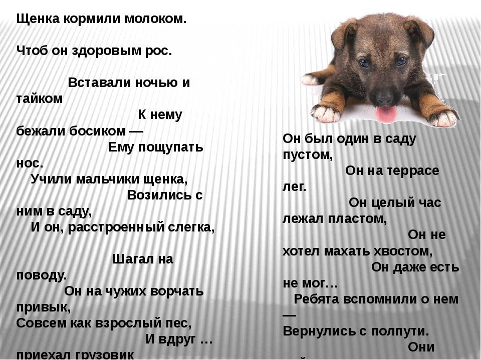 Чем нельзя кормить собаку