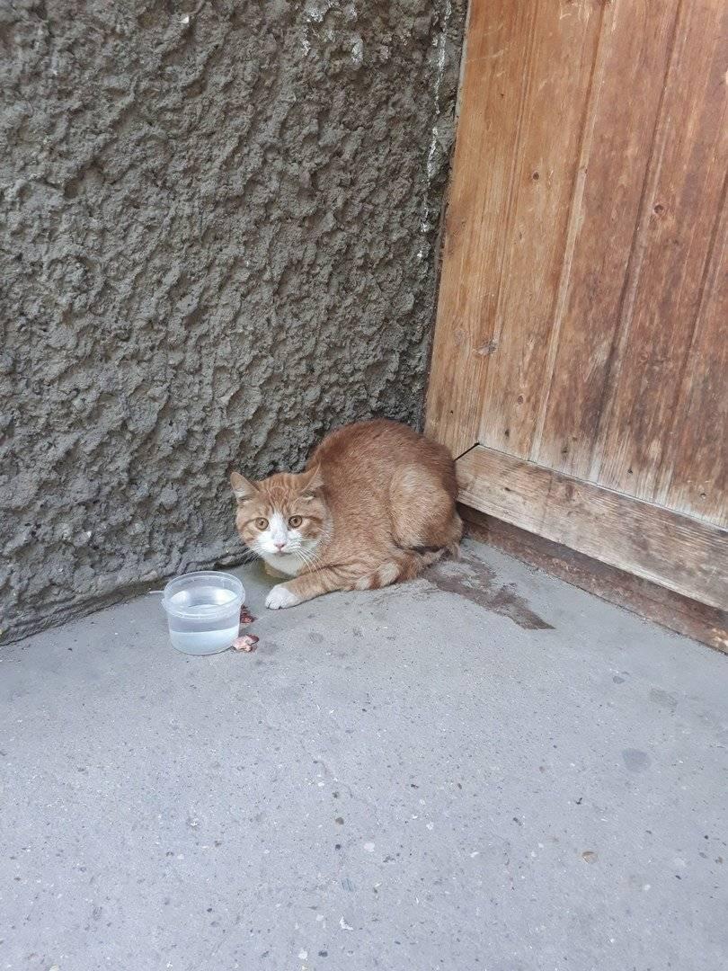Приметы про кошек в разных ситуациях