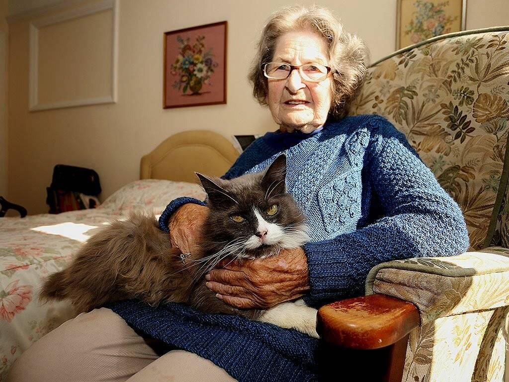 Заболевания пожилых кошек: симптомы и диагностика