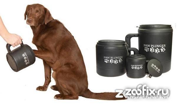 Лапомойка для собак — как выбрать?