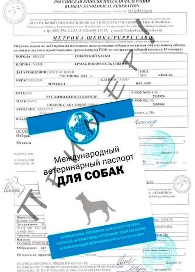 Как сделать документы на собаку